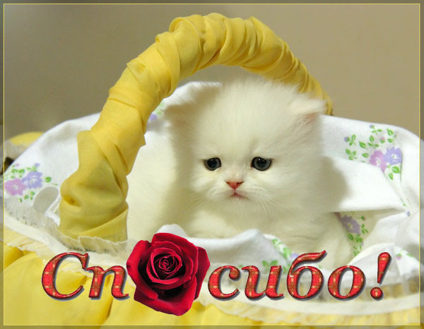 картинки кошек спасибо