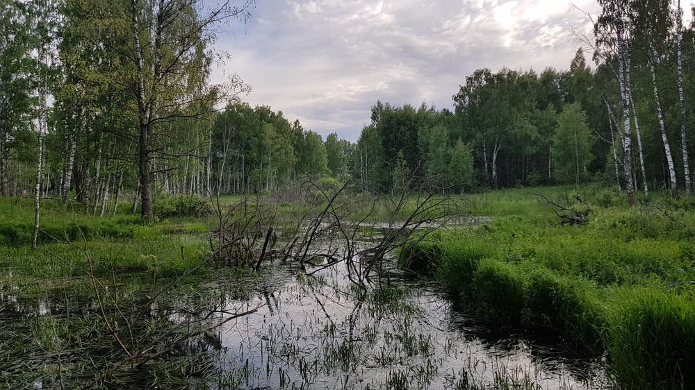 https://content.foto.my.mail.ru/mail/shel1983/30-06_04-07-17_v/h-84159.jpg