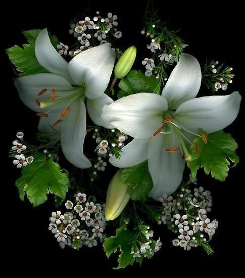 Гифы лилии мерцающие, поздравлением
