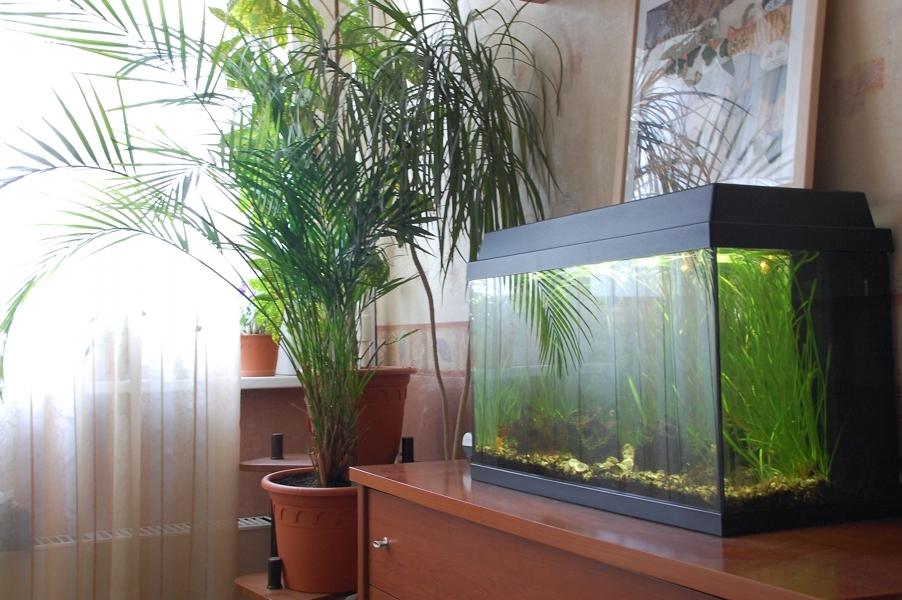 Дизайн аквариума с деревом фото