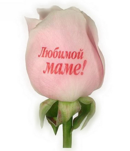 Картинки любимая мама надпись, открытка для девушки