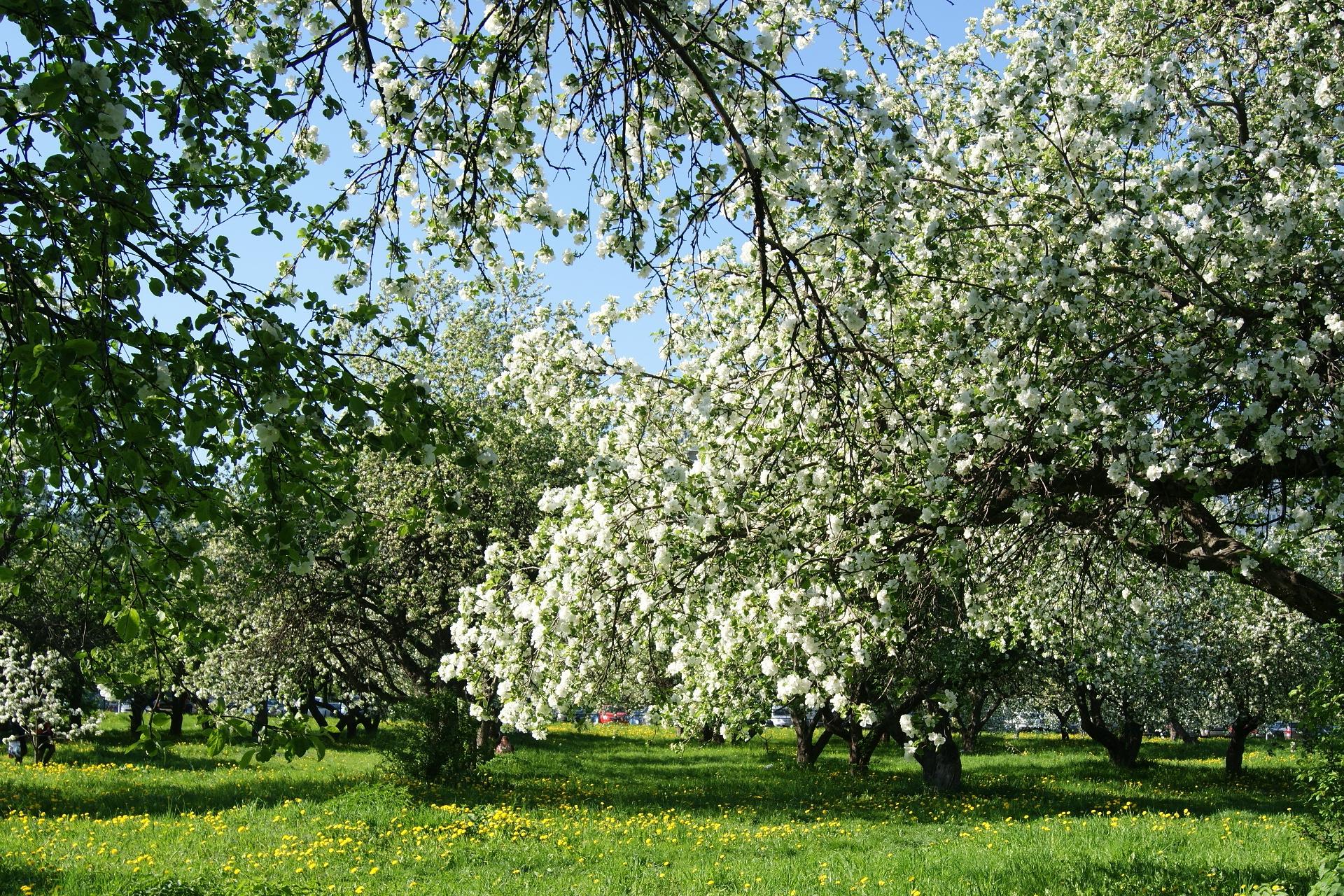 Открытки яблоневый сад, анимации