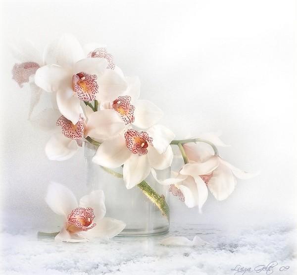 Открытки с орхидеями девушке