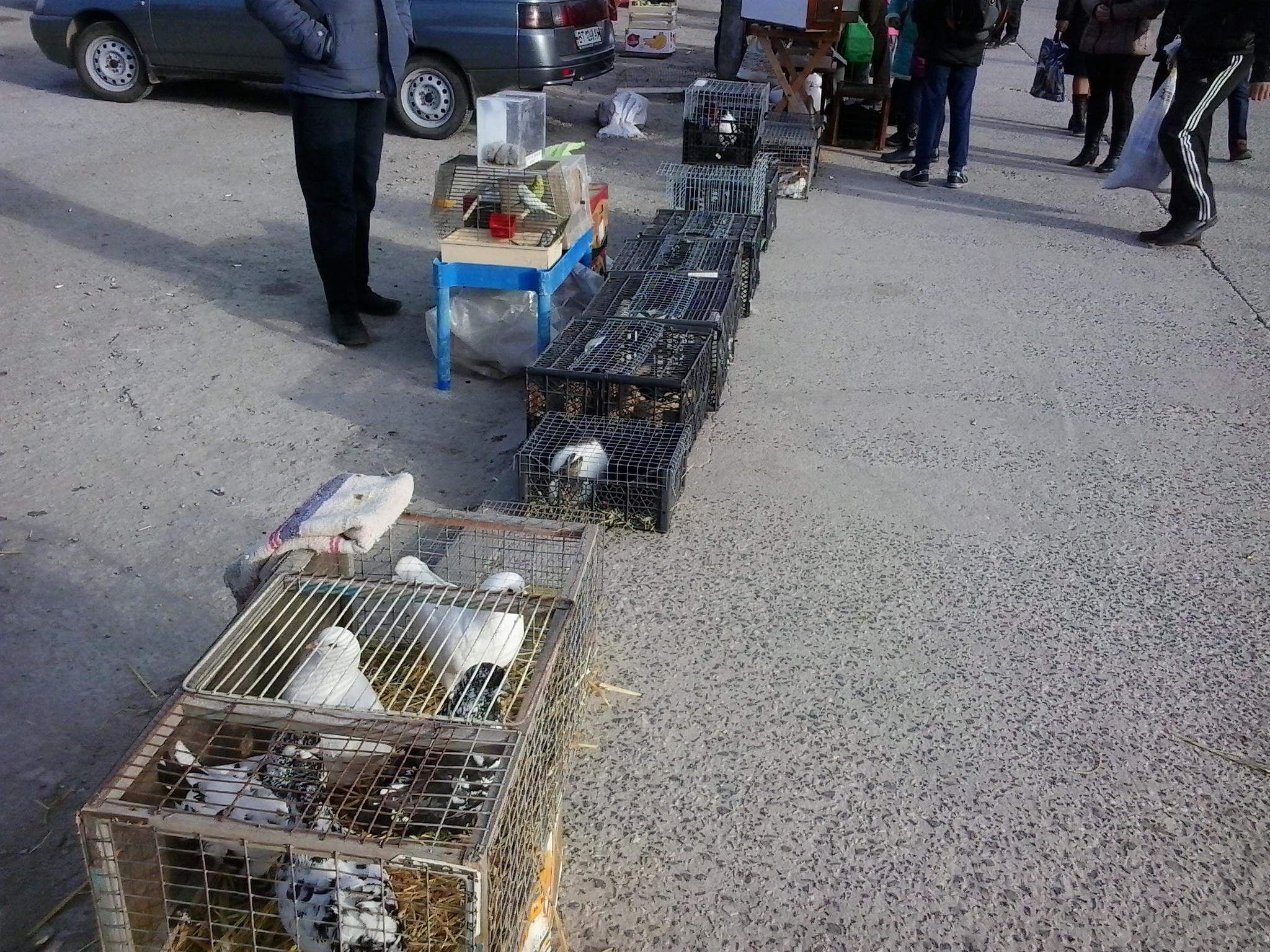 Выставка голубей в Больших Копанях