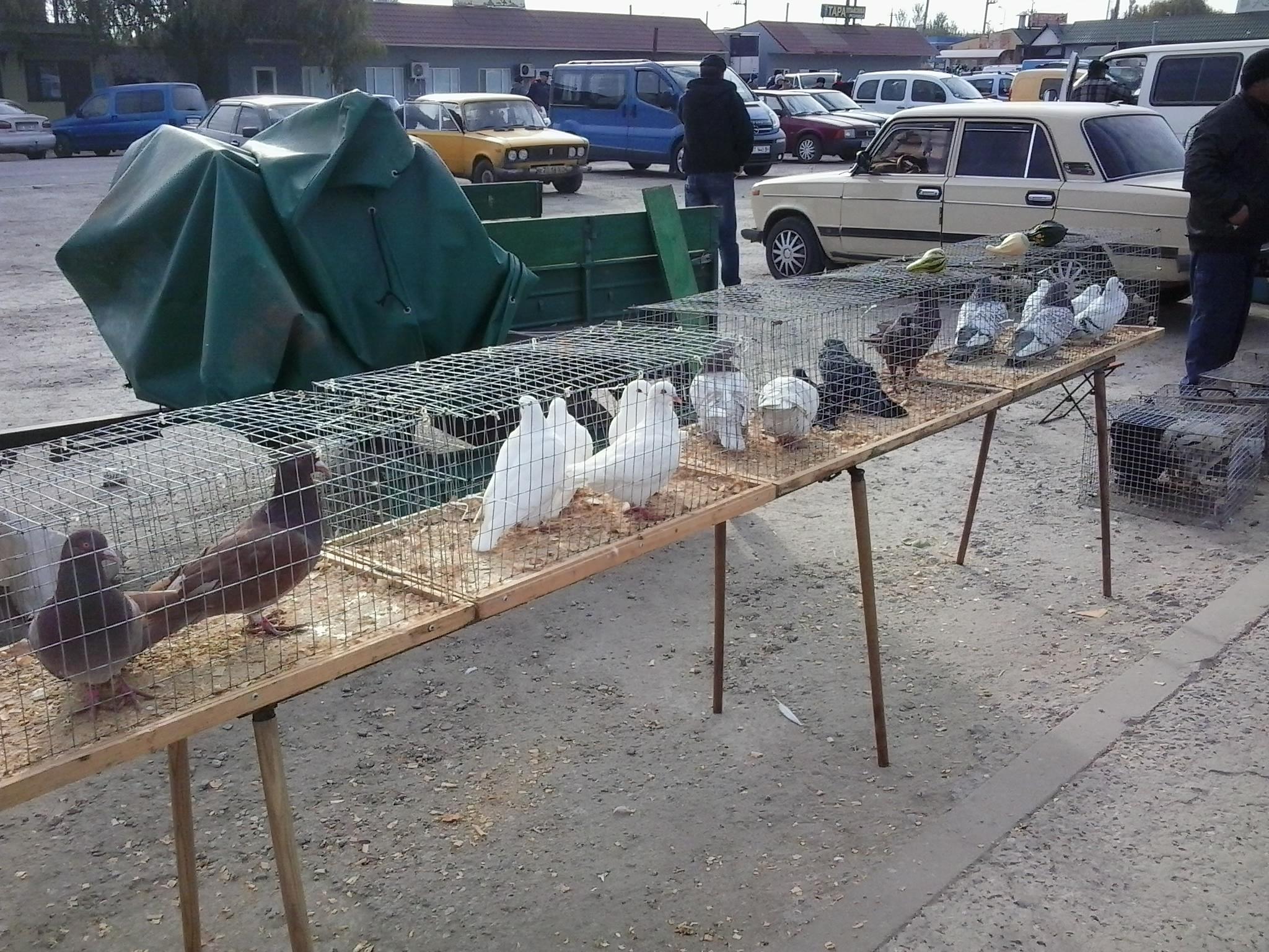 Выставка голубей, птиц и животных в Украине