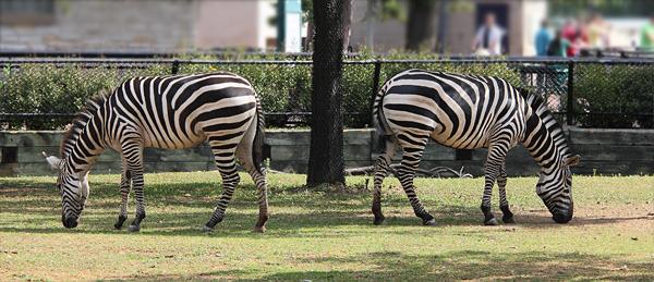 Еще три фото из зоопарка