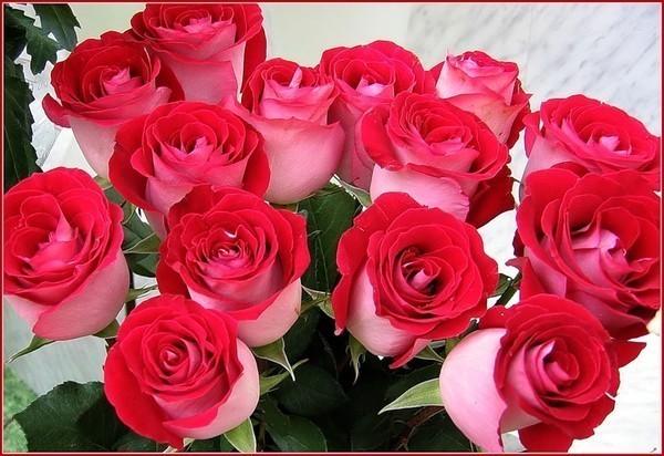 Фото самые красивые фото роз
