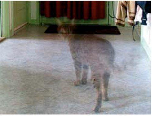 думала, она могут ли видеть коты духов идей того, как