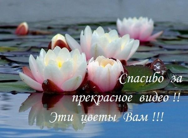 https://content.foto.my.mail.ru/mail/viktor_puzak/_blogs/i-19291.jpg