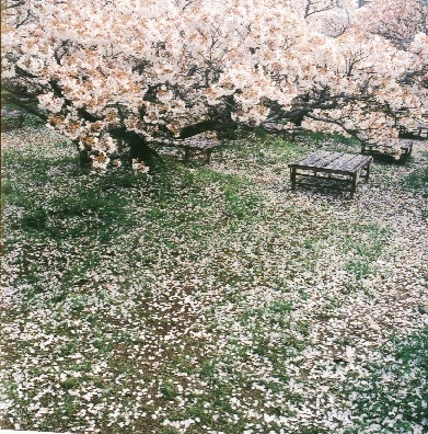 Весна - это, когда все есть...
