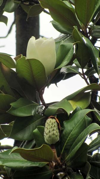 Гагра. Растительная жизнь