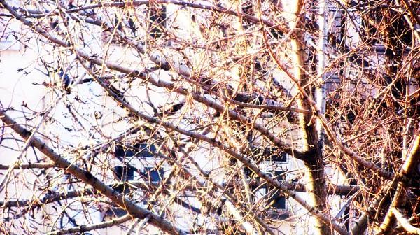 Мартовский вечер в Заоконье: Свет, избавленный от неприкаянности