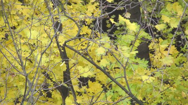Снимаем вместе с осенью заоконную позолоту... (фотоэкзерсисы Товиевича)