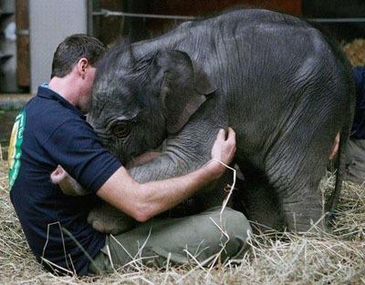 Слоненок2