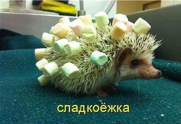 https://content.foto.my.mail.ru/mail/vyachser/_mypagephoto/i-29154.jpg