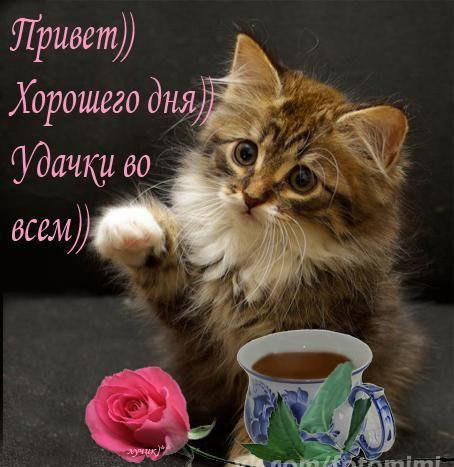 https://content.foto.my.mail.ru/mail/vyachser/_mypagephoto/i-31380.jpg