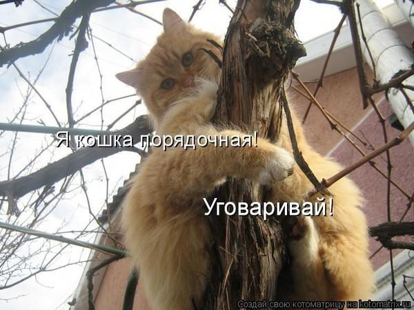 https://content.foto.my.mail.ru/mail/vyachser/_mypagephoto/i-31426.jpg