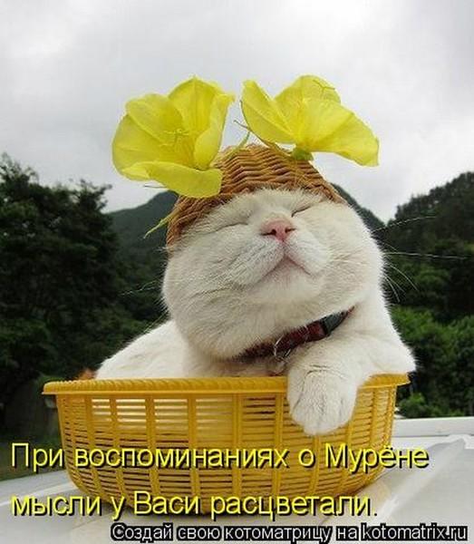 https://content.foto.my.mail.ru/mail/vyachser/_mypagephoto/i-31555.jpg