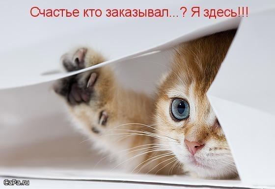 https://content.foto.my.mail.ru/mail/vyachser/_mypagephoto/i-31667.jpg