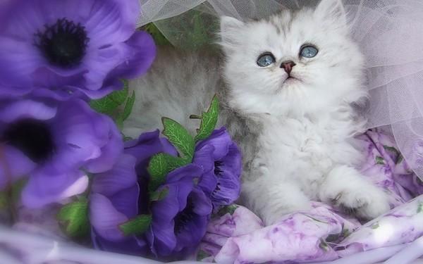 https://content.foto.my.mail.ru/mail/vyachser/_mypagephoto/i-31847.jpg