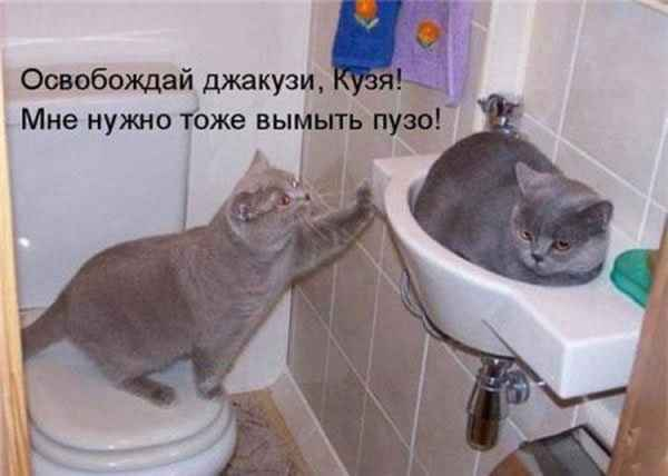 https://content.foto.my.mail.ru/mail/vyachser/_mypagephoto/i-33010.jpg