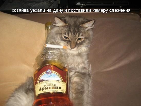 https://content.foto.my.mail.ru/mail/vyachser/_mypagephoto/i-33053.jpg