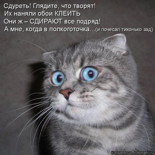 https://content.foto.my.mail.ru/mail/vyachser/_mypagephoto/i-33741.jpg