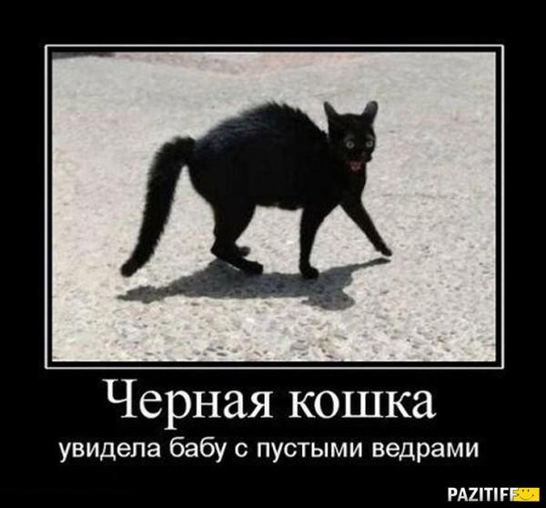 https://content.foto.my.mail.ru/mail/vyachser/_mypagephoto/i-33767.jpg
