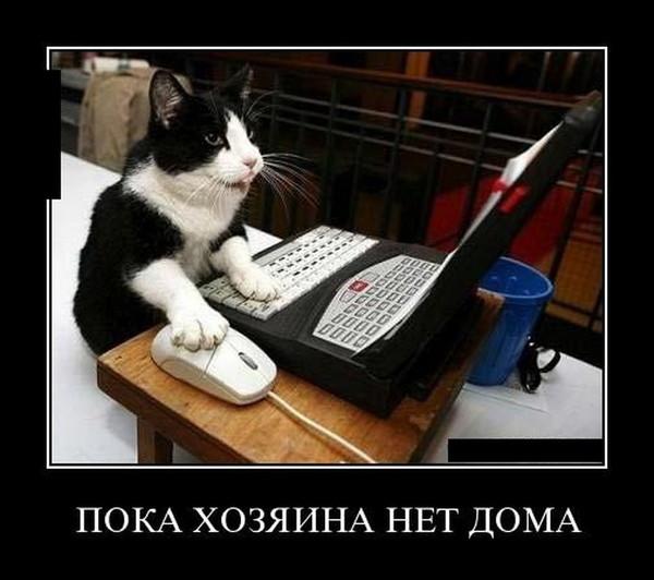 https://content.foto.my.mail.ru/mail/vyachser/_mypagephoto/i-33990.jpg