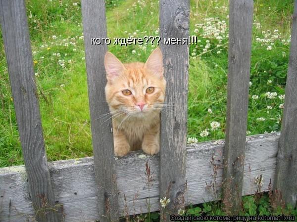https://content.foto.my.mail.ru/mail/vyachser/_mypagephoto/i-34255.jpg