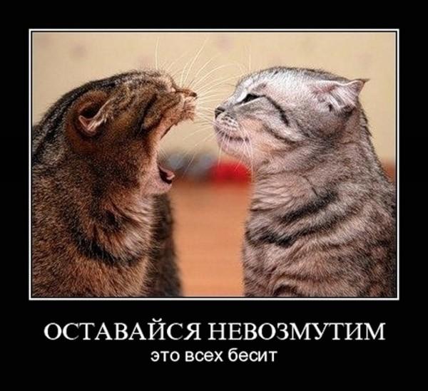 https://content.foto.my.mail.ru/mail/vyachser/_mypagephoto/i-34433.jpg