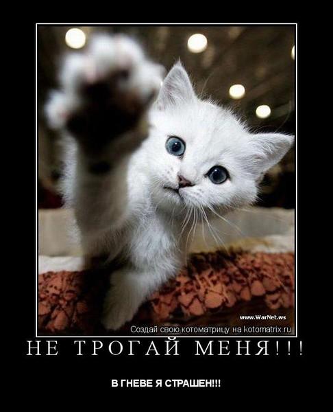 https://content.foto.my.mail.ru/mail/vyachser/_mypagephoto/i-34473.jpg