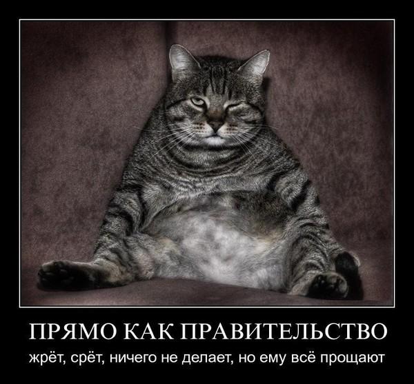 https://content.foto.my.mail.ru/mail/vyachser/_mypagephoto/i-34796.jpg