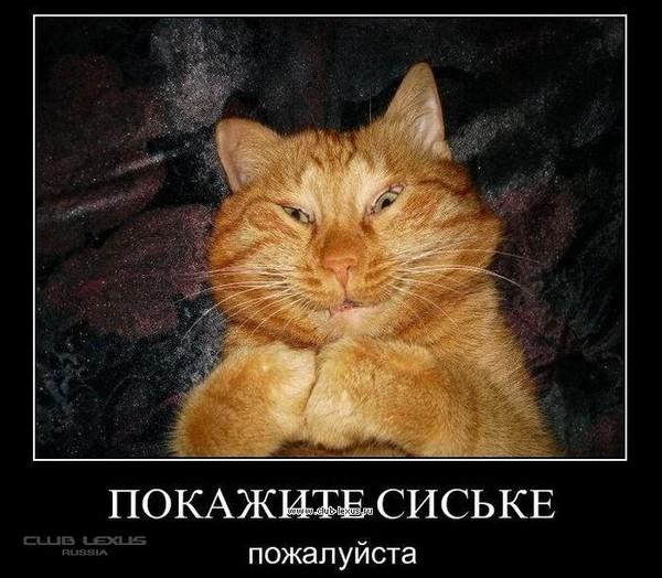 https://content.foto.my.mail.ru/mail/vyachser/_mypagephoto/i-34829.jpg