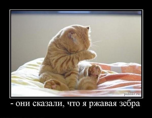 https://content.foto.my.mail.ru/mail/vyachser/_mypagephoto/i-35048.jpg