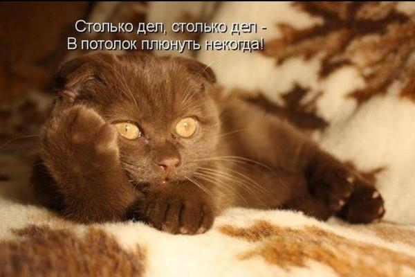 https://content.foto.my.mail.ru/mail/vyachser/_mypagephoto/i-36088.jpg