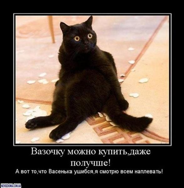 https://content.foto.my.mail.ru/mail/vyachser/_mypagephoto/i-36104.jpg