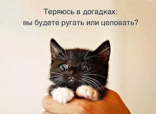 https://content.foto.my.mail.ru/mail/vyachser/_mypagephoto/i-36416.jpg