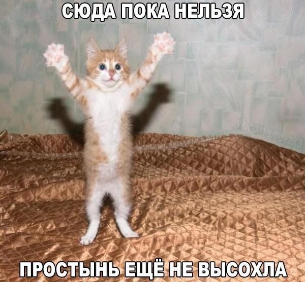 https://content.foto.my.mail.ru/mail/vyachser/_mypagephoto/i-36424.jpg