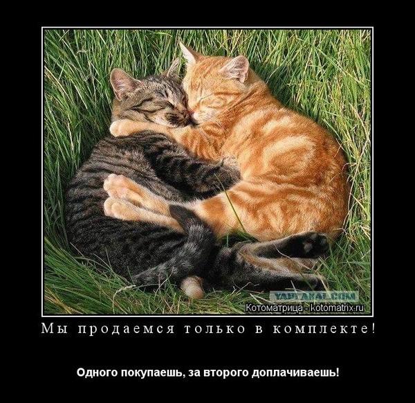 https://content.foto.my.mail.ru/mail/vyachser/_mypagephoto/i-37219.jpg