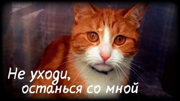 https://content.foto.my.mail.ru/mail/vyachser/_mypagephoto/i-37306.jpg