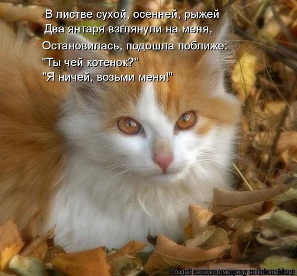 стихи пиар котят хромченко