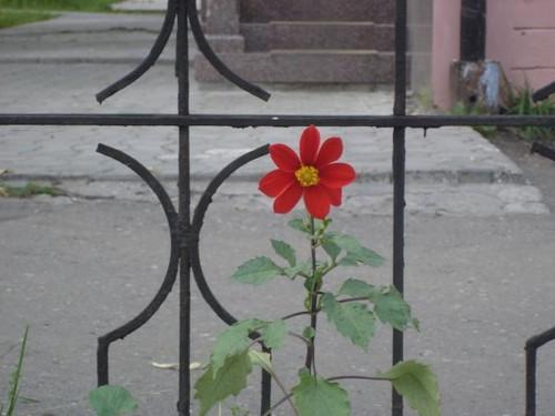 http://foto.mail.ru/mail/zinaida-icy/1/i-12.jpg