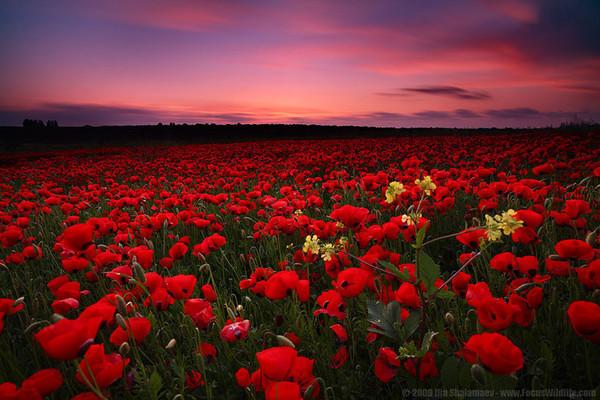 Композиции из живых цветов в корзине: обзор ФОТО! 95